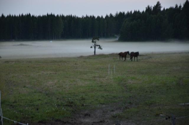 horses in evening fog