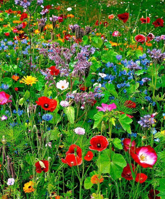 Wild flower mix