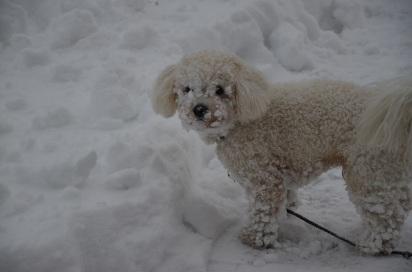 Ludd gillar snö