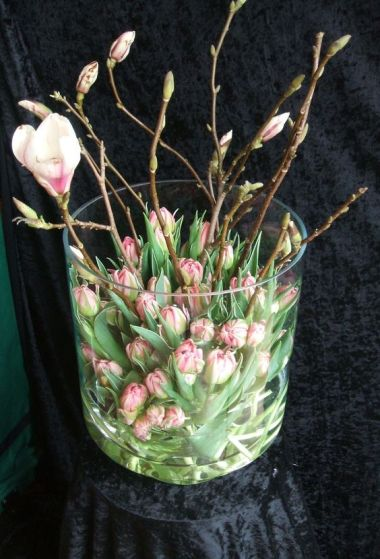Magnolia och tulpisar